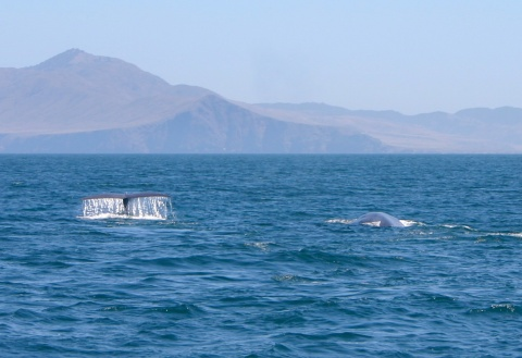 A view to Santa Cruz Island from Santa Rosa Island. The islands are a hotspot for sighting blue whales (<em>Balaenoptera musculus</em>).  ©TideLines.org