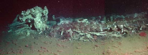 A whale fall in the deep ocean. Courtesy MBARI