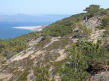 The only Torrey Pines trees are found in small groves on coastal San Diego and on Santa Rosa Island, c.Tidelines.org